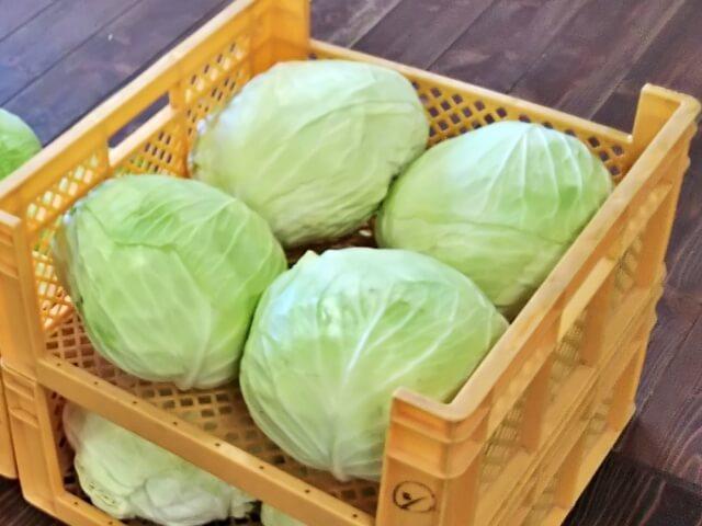 【キャベツのカロリー】キャベツは太る!?レタスや白菜とカロリー糖質を比較