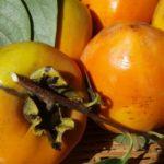 【柿のカロリー】柿は太る!?りんごや梨とカロリー糖質を比較